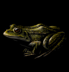 frog color graphic portrait a frog vector image