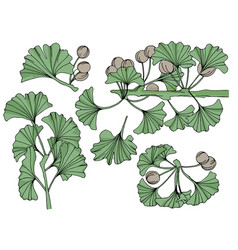ginkgo leaves and flowers ink art drawing vector image
