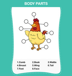 chicken vocabulary part of body vector image