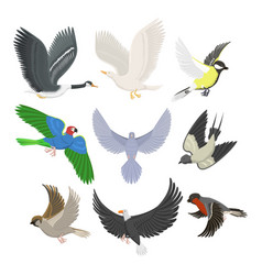 set of different flying birds vector image