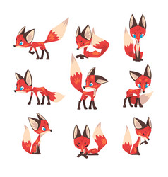 cute little fox collection fluffy blue eyed wild vector image