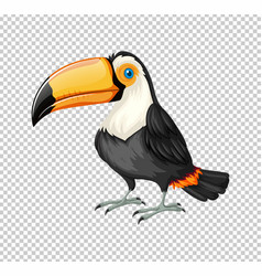 Cute toucan bird on transparent background vector