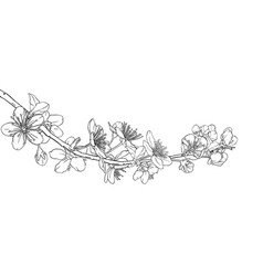 hand drawn branch with cherry blossoms sakura vector image