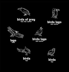Hand-drawn pencil graphics birds of prey set vector