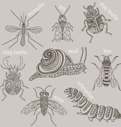 Insects 8 bugs vector