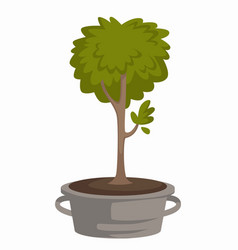 Tree sprout in metal bucket trunk and foliage vector
