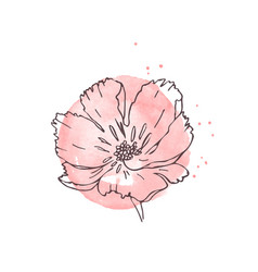 hand drawn poppy isolated vector image
