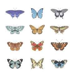 Set of realistic tenderness butterfly vector image