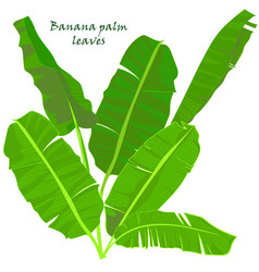 branch tropical palm banana leaves realistic vector image