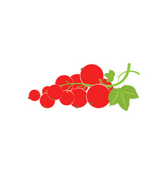 a sprig with redcurrant berries large fresh red vector image