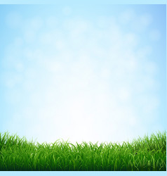 Grass with blue sky vector
