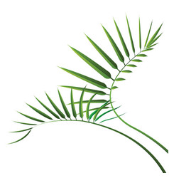 Green cycad leaf isolated on white background vector