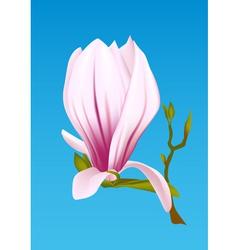 magnolia plant vector image