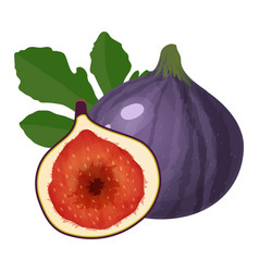 purple figs fruit isolated on white background vector image
