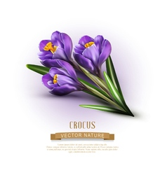 background with blue crocuses vector image