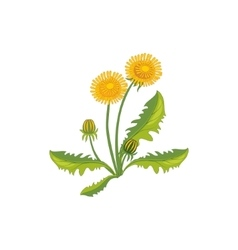Dandelion Wild Flower Hand Drawn Detailed vector
