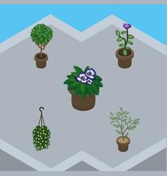 Isometric flower set of fern flower flowerpot vector