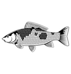Koi carp fish black and white vector