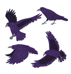 set crows isolated on white background vector image
