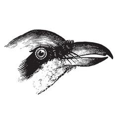 Shrike beak vintage vector