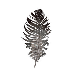 hand drawn smoth black and grey dove bird feather vector image vector image