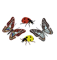 Butterfly and ladybug vector