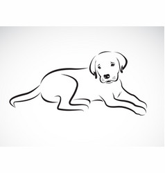 dog labrador on white background pet animal vector image