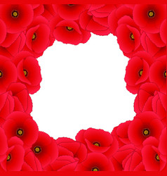 red corn poppy border vector image