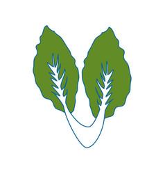 Salad vegetable food vector