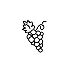 web line icon grapes bunches of grapes vector image