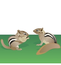 Chipmunks vector image