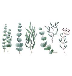 Decorative eucalyptus vector