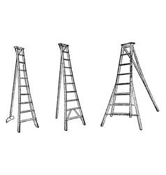 Step ladder vintage vector