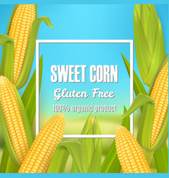 sweet corn poster label sticker template vector image