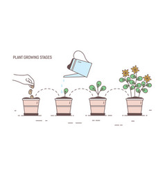 Growing stages of potted plant - seeding sprout vector