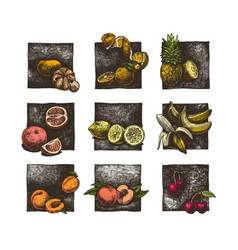set citrus and fruits vector image