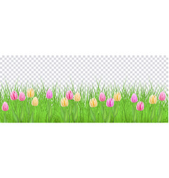 spring floral border with colorful tulips on green vector image