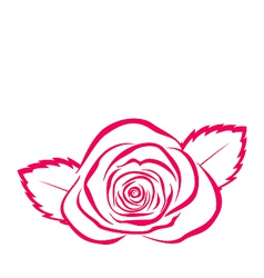 Rose hand drawen style isolated on white vector image vector image