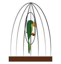 A green parrot in cage or color vector