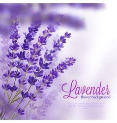 Lavender Flower Background vector