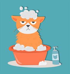 Portrait cat animal bathe pet cute kitten purebred vector