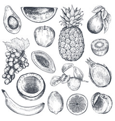 set hand drawn fresh fruits in sketch style vector image
