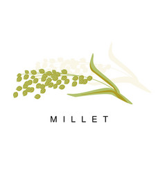 millet ear infographic with vector image