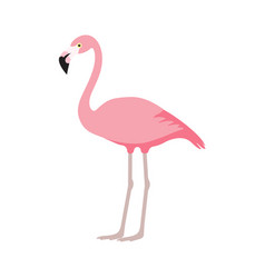 Pink flamingo icon over white background vector