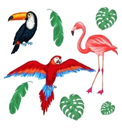 Set tropical birds and palm leaves vector