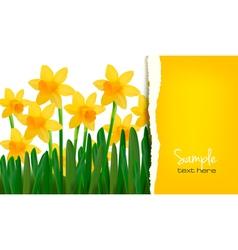 daffodil card vector image