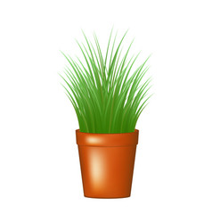 decorative grass in flowerpot vector image
