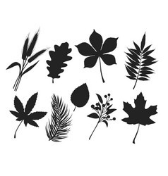 fall leaves silhouettes vector image