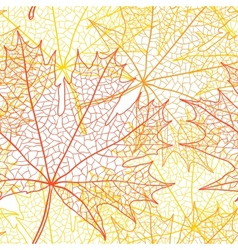 Autumn macro leaf of maple bacground vector image