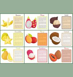 coconut and banana carambola posters set vector image